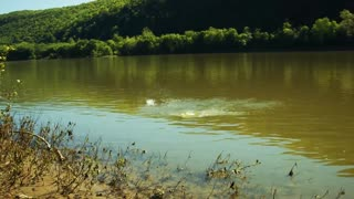 A Pound of Sodium Metal in the River - Video