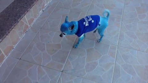 Dog Plays With A Blue Dog