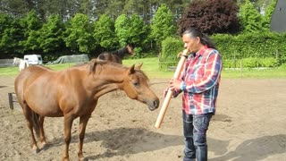 Man captivates horses with native flute - Video