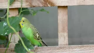 Green Funny Parrot