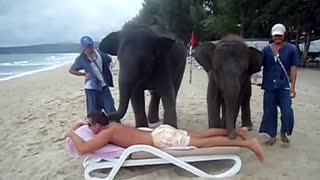 Getting An Elephant Massage In Thailand Might Not Be A Good Idea - Video