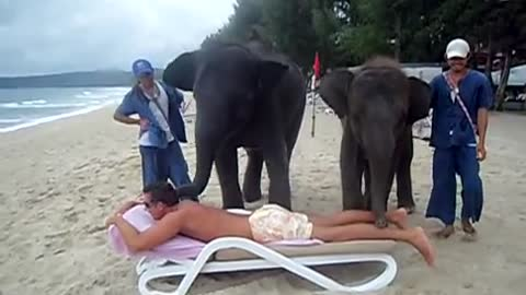 Getting An Elephant Massage In Thailand Might Not Be A Good Idea