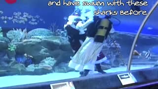 Santa Swims With Sharks - Video