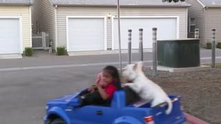 Bentley the puppy is thrilled to go for toy car ride - Video
