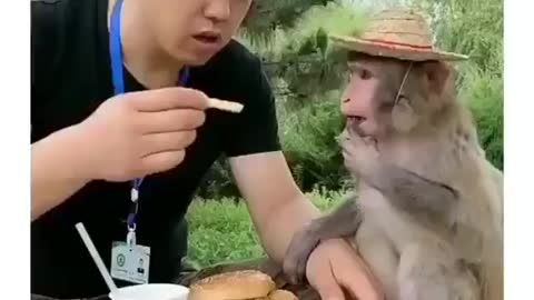 A kiss for a meal