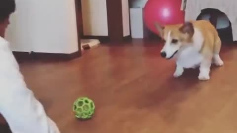 Real smart dog and lovely - Funny pets