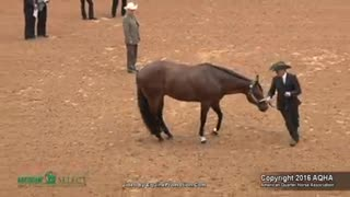 A Moment Can Make A Big Change In Showmanship! - Video