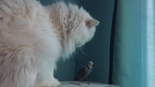 Birds are friends not food! - Video