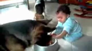 Baby And Dog Fight Over Food - Video