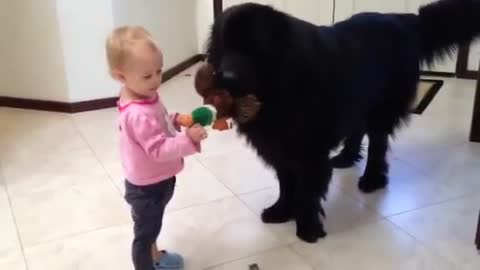 Giant dog and toddler play Tug-of-War