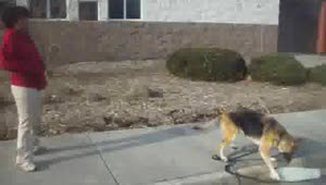 German Shepherd has issues with a skateboard - Video