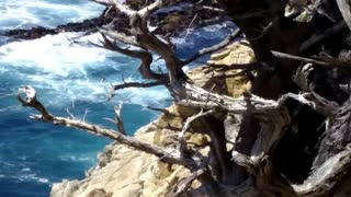 Point Lobos State Natural Reserve - Video