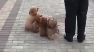 small dogs - Video