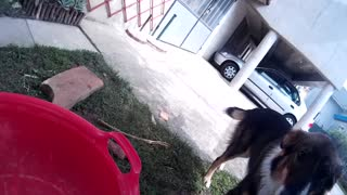 Dog conquers fear for favorite toy - Video