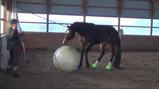 Horse loves to play with giant ball - Video