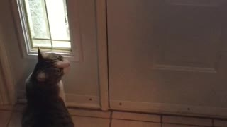 Cat has hilarious reaction to first snow encounter