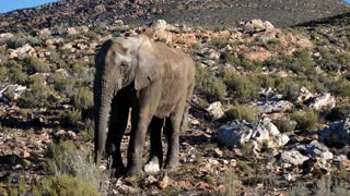 Elephant is the greatest & biggest Animal on the surface of Earth