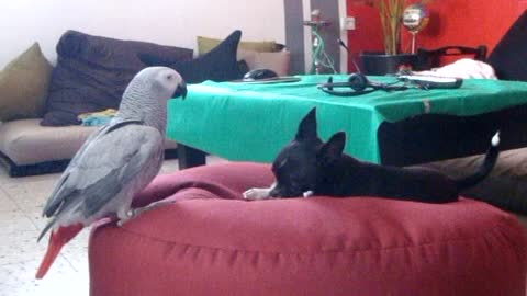 Dog and parrot are best friends
