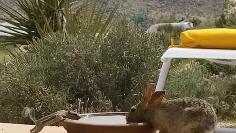 Wild Squirrel and Bunny Sharing Water