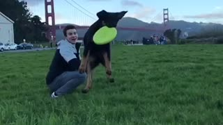 Dog catching frisbee in slow motion  - Video