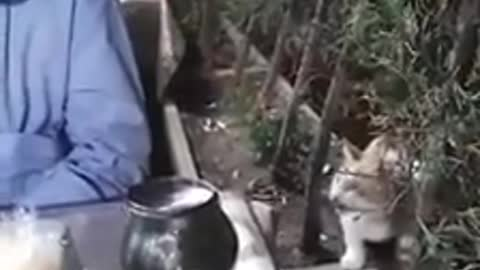 Friendly wild cat politely begs for scraps