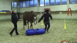 Horse weaves through cones, but this majestic animal doesn't need any lead ropes - Video