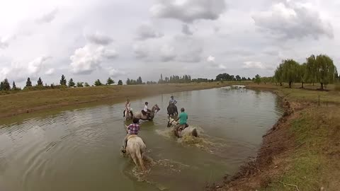 Horses went into the water with out any hesitation