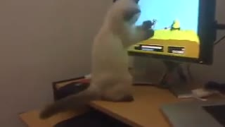 Cat is the best video games player ever!