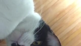 Cats Using Mobile Phones