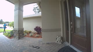 Package Delivery Man Encounters Pair of Snakes