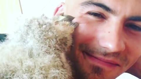 Baby owl gives caretaker loving kisses