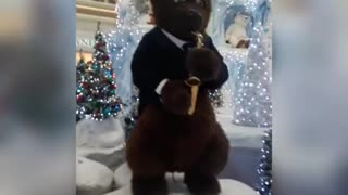 Orchestra playing bears.