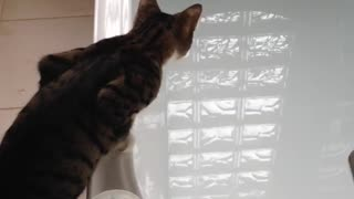 Curious Cat Learns About Water the Hard Way