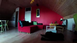 Hidden camera time lapse exposes dog's