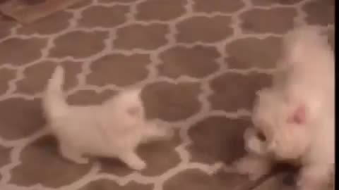my cat running after me in the house