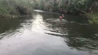 Amazing Boy Catch Turtle Strange Traditional Tools (Chhneang) - How To Catch Turtle In Battambang  - Video