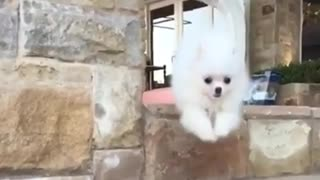 when u come home after long journey away from your dog - Video