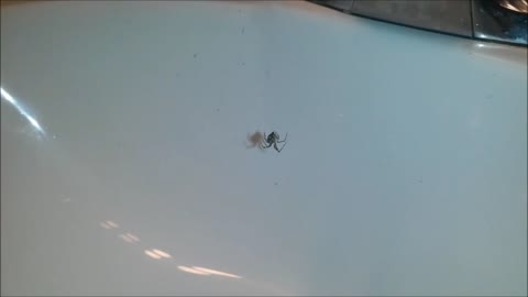 Guy startles spider while yelling at it