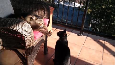 Rude kitty attacks sleeping cat for no apparent reason