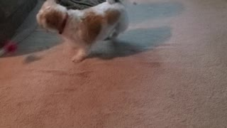 Dog Chases After Bird