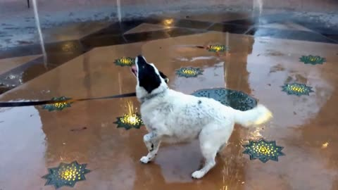 Playful dog humorously enjoys water fountain