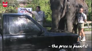 Elephant Car Wash - Video