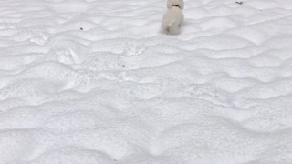 White dog running around in snow