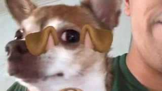 Dog filter on chihuahua goes crazy