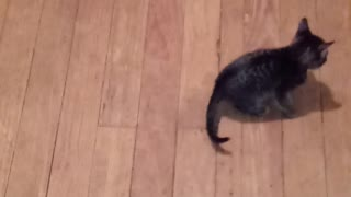 Kittens chasing a string
