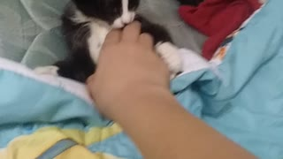 Cat plays with my hand