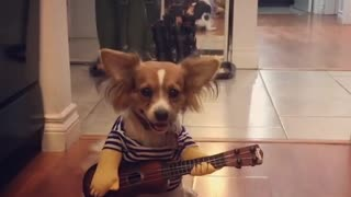 Music-Loving Dog