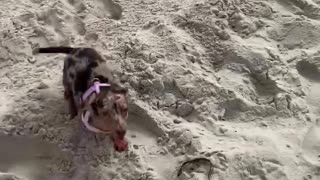 First time at the beach