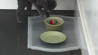 Cat Cant Move a Stuck Ball - Video