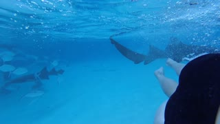 Woman Films The Moment She Gets Bit By A Nurse Shark - Video